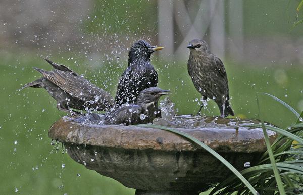 bird-hygiene-and-wellness