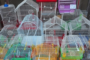 small-bird-cages